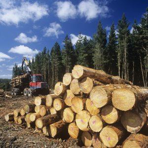 Незаконная вырубка деревьев в городе