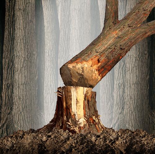 Незаконная вырубка деревьев – нормативы, ответственность